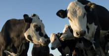 Dairy sector well placed to take advantage of technology revolution